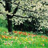 Mevsimler İlkbahar